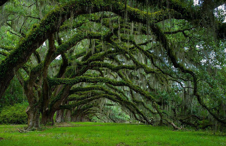 地球上最帅的树林