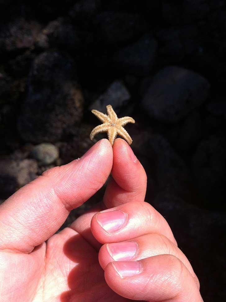 海洋生物也是令人惊异的……看这个小型海星!