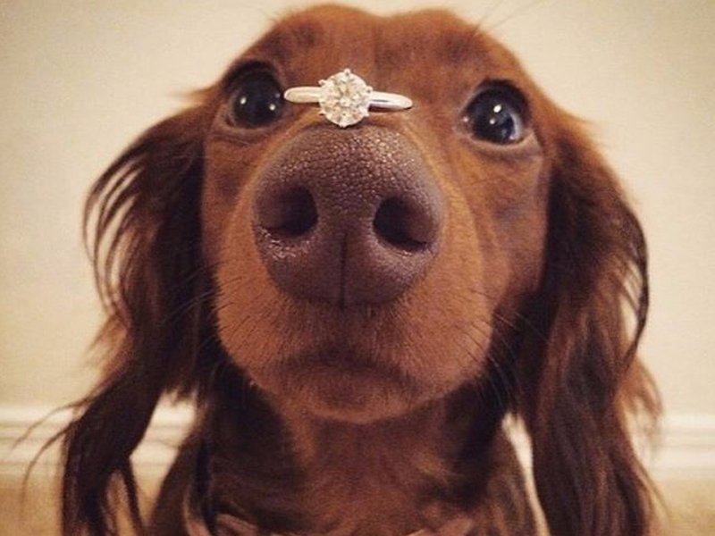 动物求婚可爱图片